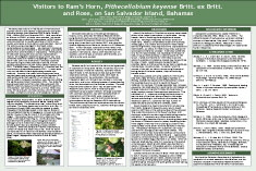 Poster presentation design services for Posterpresentations com templates